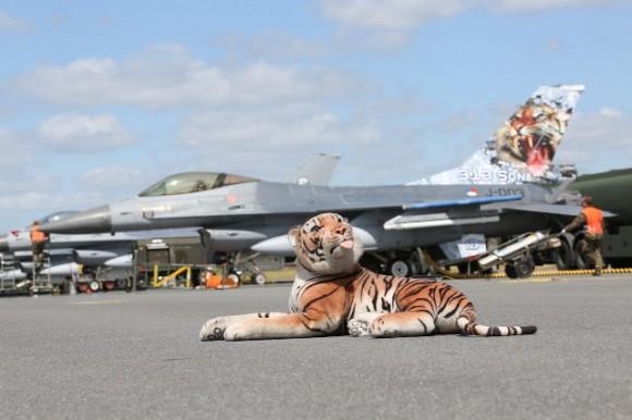 F-16 e tigre - Tiger Meet 2014 - foto Luftwaffe