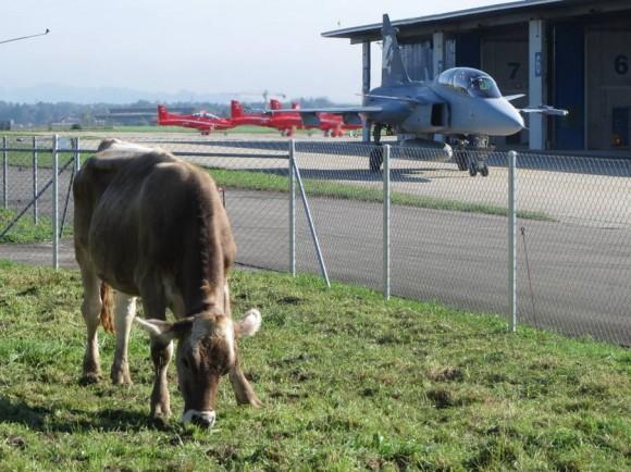 Gripen F de testes em Emmen na Suíça com pasto ao lado - foto via Gripen Blog